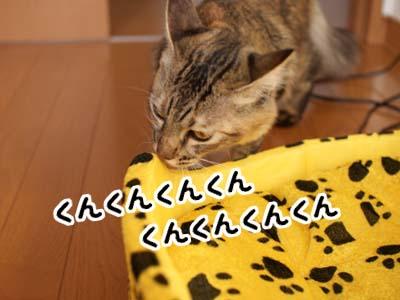 cat1420
