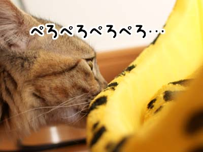 cat1421