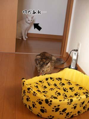 cat1422