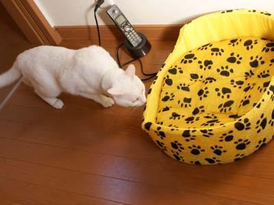 cat1423