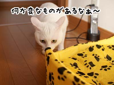 cat1424