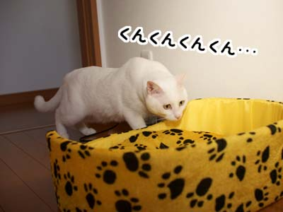 cat1425
