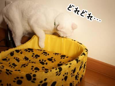cat1426
