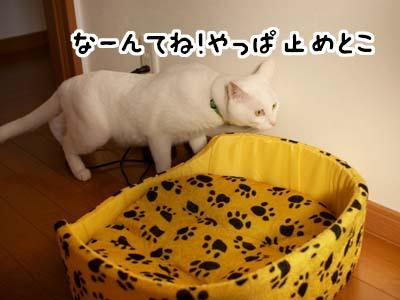 cat1427