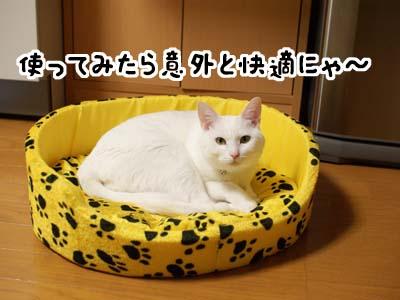 cat1429