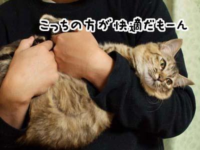 cat1430