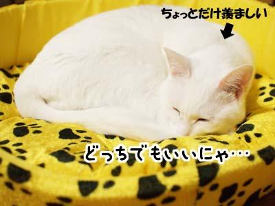 cat1432