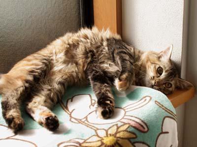 cat1433