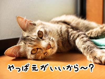 cat1435