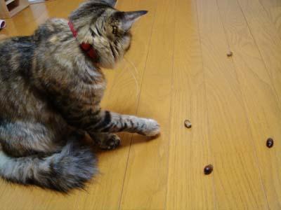 cat1440