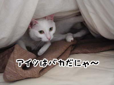 cat1441