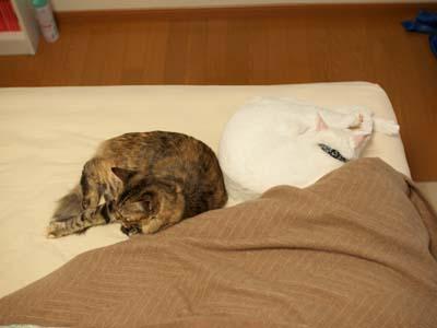 cat1442