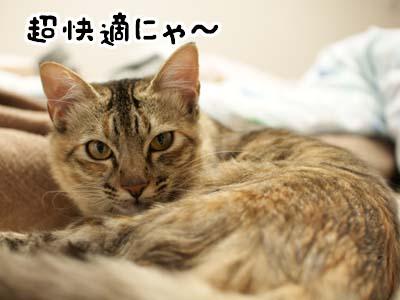 cat1444