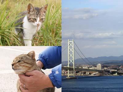 cat1456