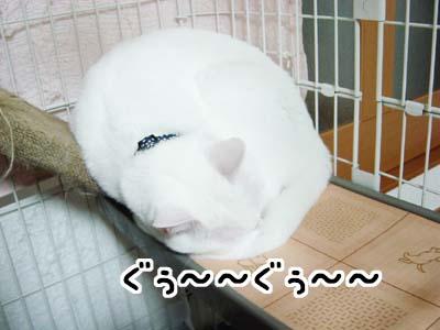 cat1458