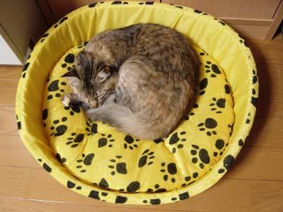 cat1459