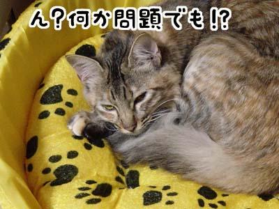 cat1460