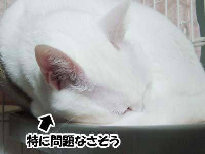 cat1461