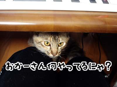 cat1463