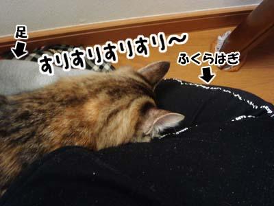 cat1464