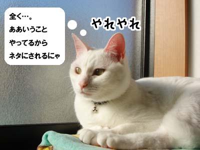 cat1465