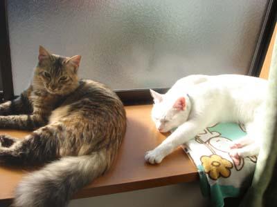 cat1466