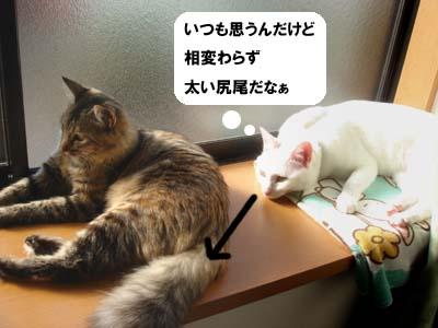 cat1467