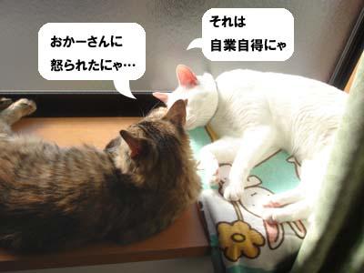 cat1468