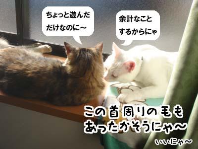 cat1469
