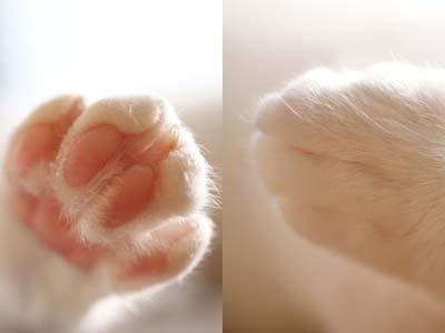 cat1471