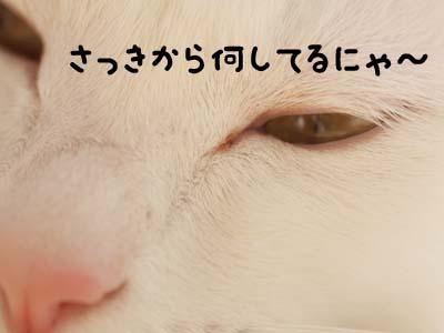 cat1472