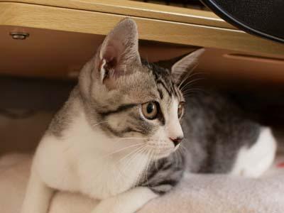 cat1473