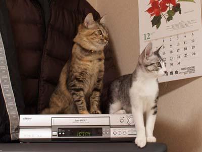 cat1475