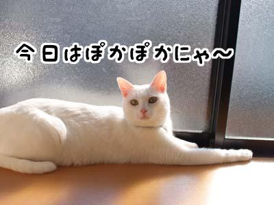 cat1476
