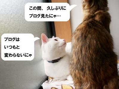 cat1477