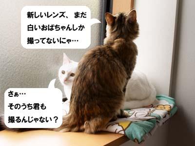 cat1478