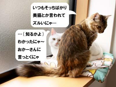 cat1479