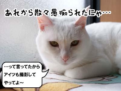 cat1480