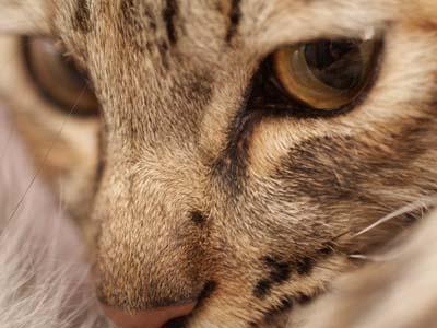 cat1481
