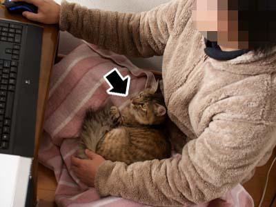 cat1483