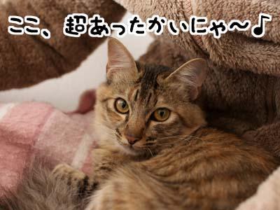 cat1484