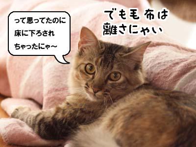 cat1485