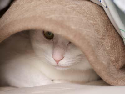 cat1489