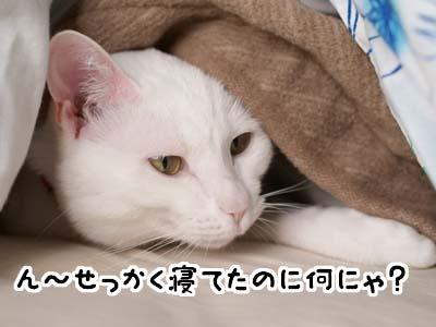cat1490
