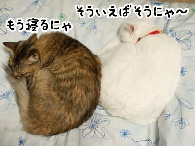 cat1494