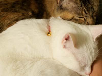 cat1495