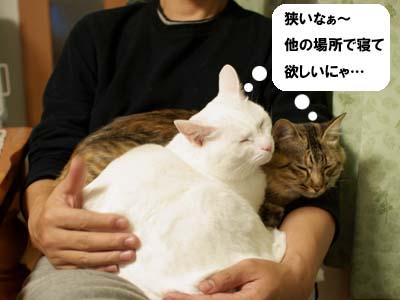 cat1497
