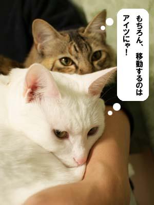 cat1498