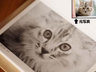 cat1505