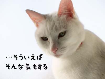 cat1506